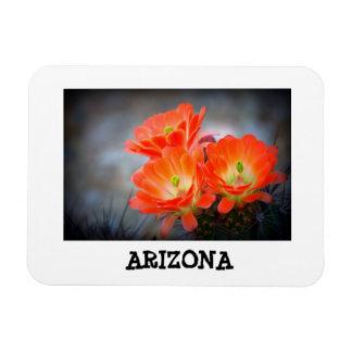 Ímã Arizona em chamas do deserto