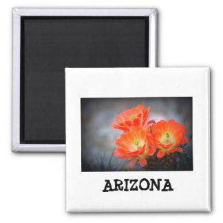 Imã Arizona em chamas do deserto