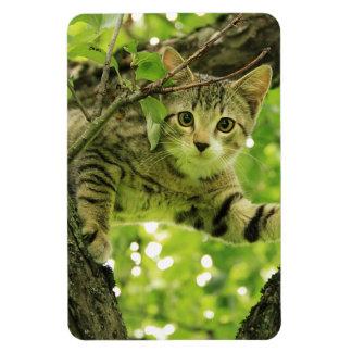 Ímã Árvore de escalada do gato selvagem brincalhão