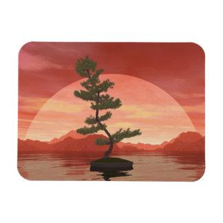 Ímã Árvore dos bonsais do pinho escocês - 3D rendem