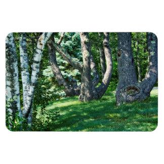Ímã Árvores do montanhês