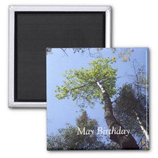 Imã As partes superiores da árvore sob o céu azul
