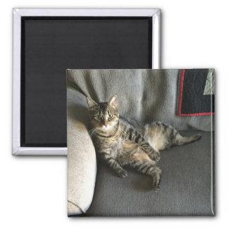 Imã Assento do gato