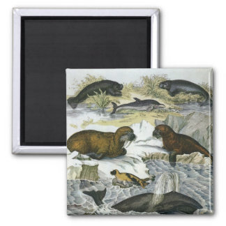 Imã Baleias do vintage, morsas e selos, animais
