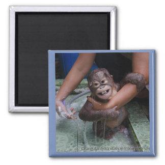 Imã Bebê de sorriso do orangotango dos animais