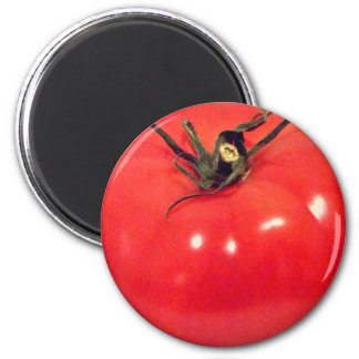Imã Beefsteak 4Marco do tomate