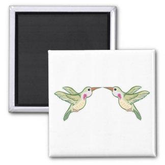 Imã Beijando colibris