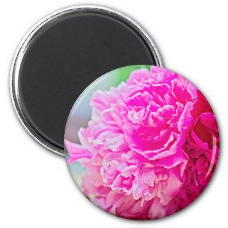 Imã Beleza cor-de-rosa da peônia