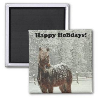 Imã Boas festas foto islandêsa do cavalo