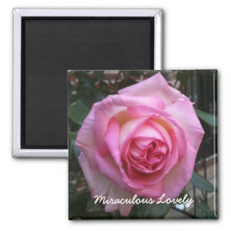 Imã Bonito miraculoso - ímã cor-de-rosa