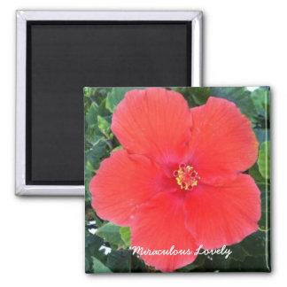 Imã Bonito miraculoso - ímã vermelho da flor