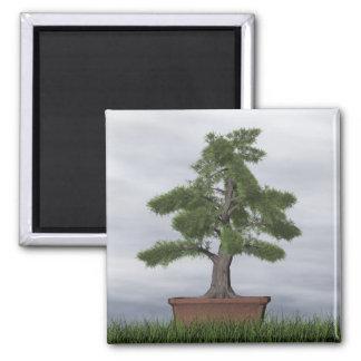 Imã Bonsais da árvore do zimbro do templo - 3D rendem