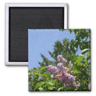 Imã Borboleta em um arbusto bonito do Lilac