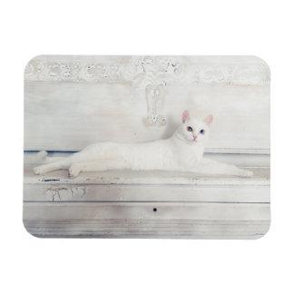 Ímã branco bonito do gato