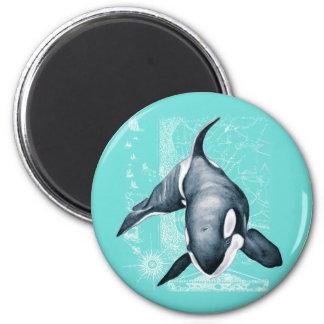 Imã Branco da cerceta da orca