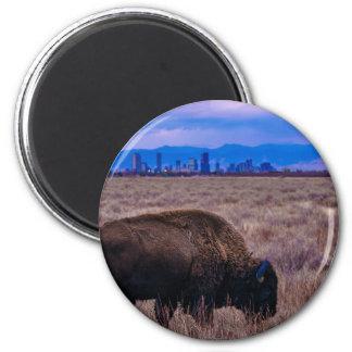 Imã Búfalo em Denver, Colorado