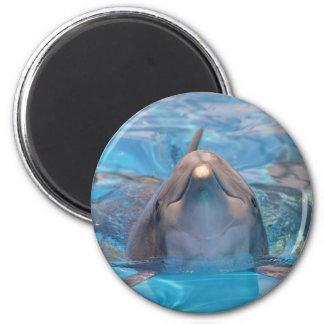 Imã Cabeça do golfinho de bottlenose