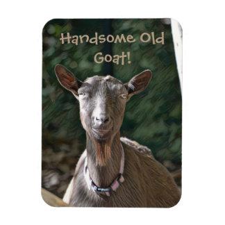 Ímã Cabra velha considerável