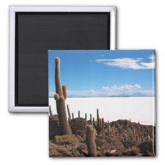 Imã Cacto gigante no ímã de Salar de Uyuni