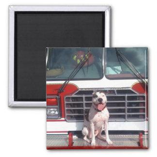 Imã Cão da casa do fogo do T-Osso do pitbull