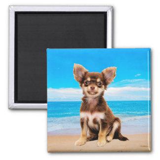 Imã Cão da chihuahua que senta-se na praia tropical