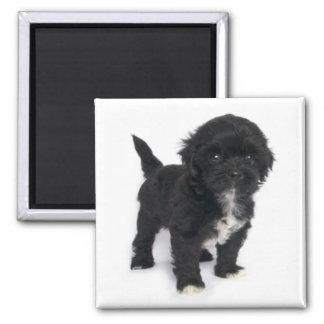 Imã Cão de filhote de cachorro Shihtzu preto e branco