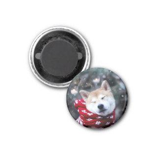 Imã Cão de Shiba - cão do doge - Feliz Natal