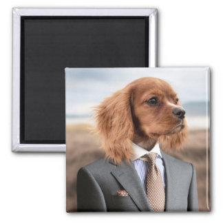 Imã Cão em um terno