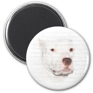 Imã Cara branca do terrier do pitbull
