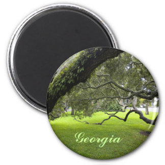 Imã Carvalho bonito de Geórgia e gramado verde