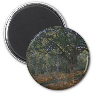 Imã Carvalho na floresta