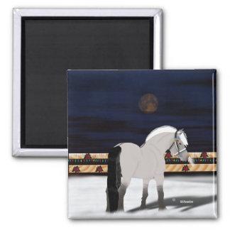 Imã Cavalo norueguês bonito do fiorde