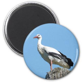 Imã Cegonha branca 2,0 (Storch)