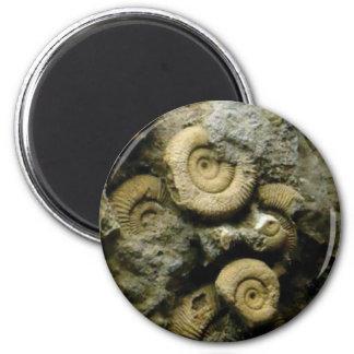 Imã círculos de caracóis fósseis