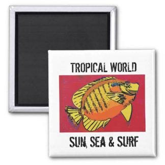 Imã Clube tropical do surf