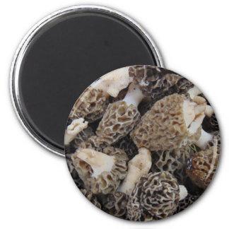 Imã Cogumelos do Morel