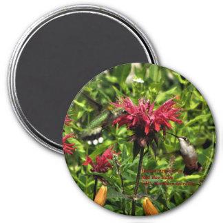 Imã Colibris em jardins vermelhos do norte do bálsamo