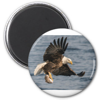 Imã Comida de travamento da águia americana