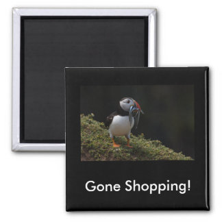 Ímã comprando ido do papagaio-do-mar de Fisher Ímã Quadrado
