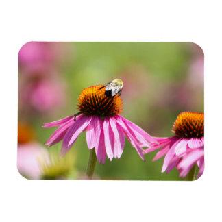 Ímã Coneflower e abelha do mel