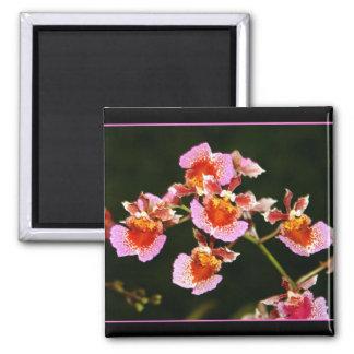 Ímã cor-de-rosa das orquídeas ímã quadrado