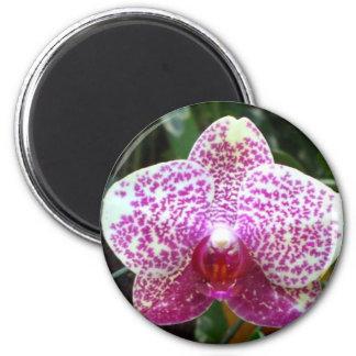 Ímã cor-de-rosa das orquídeas ímã redondo 5.08cm