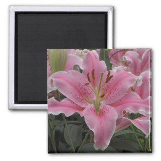 Ímã cor-de-rosa do lírio ímã quadrado