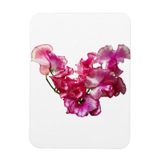 Ímã Coração cor-de-rosa da ervilha doce