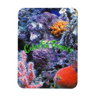 Ímã Coral colorido do mar
