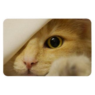Ímã Couro cru - e - gatinho da busca sob a cobertura