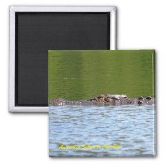 Imã Crocodilo australiano da água salgada