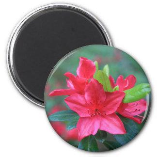 Ímã da flor da azálea ímã redondo 5.08cm