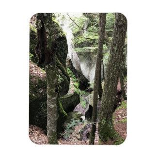 Ímã da foto com imagem bonita das madeiras