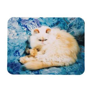 Ímã da foto do gato persa
